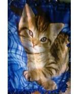 "Cat Blue Fleece Knot Blanket 40"" x 48"" - $15.00"