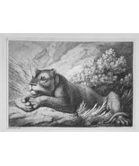 1801 ORIGINAL ETCHING Print by Howitt - Animals Lioness in Bush on the P... - $20.92