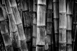Bamboo Stalks, Black and White, Fine Art Photos, Paper, Metal, Canvas Pr... - $40.00