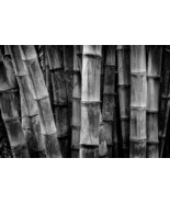 Bamboo Stalks, Black and White, Fine Art Photos, Paper, Metal, Canvas Pr... - $40.00 - $442.00