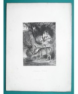 YOUNG MAIDEN Forest Solitude Deer Family - Engraving Antique Print - $12.60