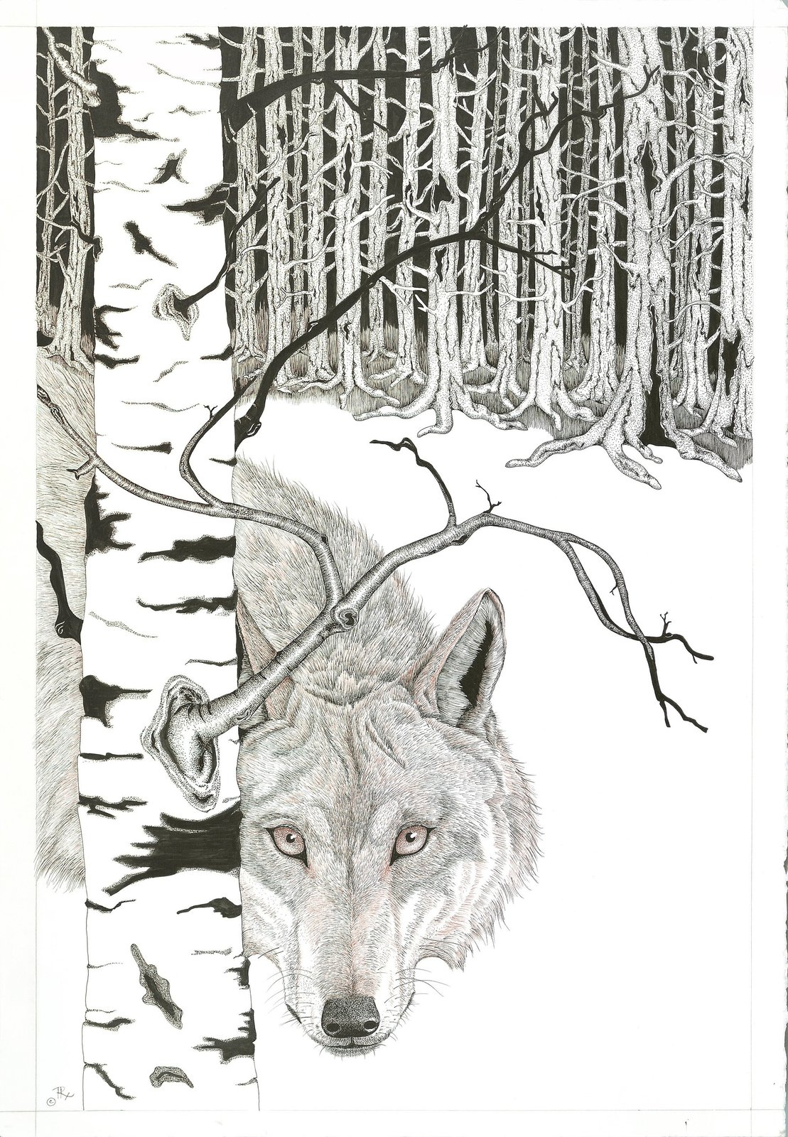 Framed Wildlife Art Print by artist, Pen and Ink, Wolf, Animal Wildlife Drawing,