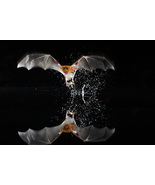 MAYAN BAT SACRED VAMPIRE GOD Star Demon Direct Binding Online Service izida - $343.00