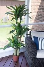Elegant Dracaena Artificial Silk Plant Corn Stalk Home Office Stylish Decor - $152.17