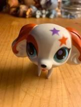 Littlest Pet Shop #2688 White & Orange Cocker Spaniel Puppy Dog Blemish  - $142,58 MXN