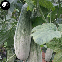 Buy White Cucumis Melon Seeds 400pcs Plant Sweet Melon Vegetable Sugar F... - $15.99