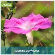 100pcs Chinese Very Beautiful Hanging Petunia Bonsai Seeds Fresh Nature - $2.18