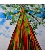 Rainbow eucalyptus seeds thumbtall