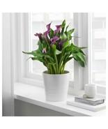 "IKEA MUSKOT Plant pot, white, 6 "" - $14.84"