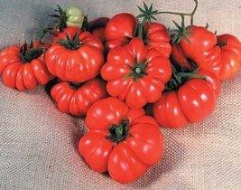 2000 Seeds of Costoluto Genovese - Tomatoes Mid Season - $59.40