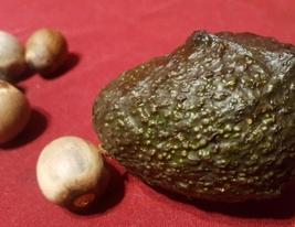 8 pcs Fresh Seeds - Avocado California Fruit Tree Seeds #AKS12 - $28.50+