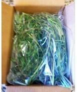 "STRING OF BANANAS House Plant Succulents Senecio Radicans 12 12"" Cutting... - $9.99"