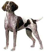 German Shorthaired Pointer Dog Counted Cross Stitch Pattern - $14.99