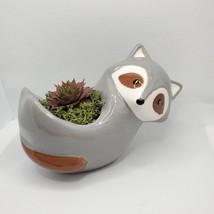 "Live Succulent in Raccoon Animal Planter, 5"" grey glazed ceramic pot Sempervivum image 2"
