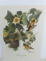 Baltimore Oriole (Icterus Galbula) Bird 9x12 Frameable Print Nature Birds - $11.75