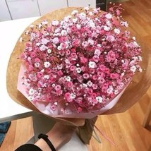 300 of Gypsophila Seeds babys breath romantic and beautiful Flower Seeds... - £0.74 GBP