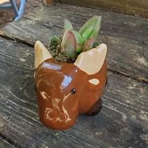 "Kalanchoe Succulent in Ceramic Moose Planter, 5"" Brown, Animal Pot, Deer Elk image 5"