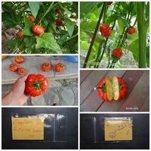 Red Eggplant - Aubergine ''Du Burkina Faso'' ~35 Top Quality Seeds - EXTRA RARE - $14.48