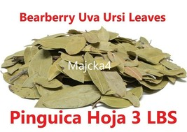 PINGUICA Hojas 3 LBS UVA URSI FRUIT Bearberry Leaves Hierbas Mexicana MA... - $68.39