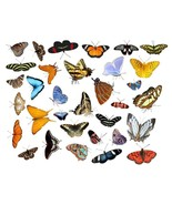 Rockabilly Guitar Cool Butterflies Galore WaterSlide Decals #20 - $9.85