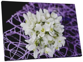 "Pingo World 0809QFXZBLG ""Snowdrops Flower"" Gallery Wrapped Canvas Wall Art, 20""  - $42.52"