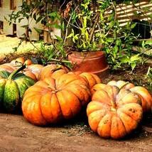 20Pcs Pumpkin Cinderella Vegetable Seeds Cucurbita Maxima Seed - $19.73
