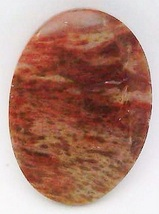 Petrified Wood Cabochon 43 - $7.90