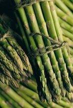 Roots of Millennium Green Asparagus (100) - $207.90