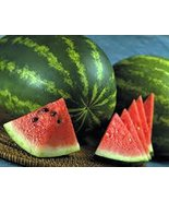 Watermelon, Jubilee, Heirloom, Organic 20 Seeds, Large, Sweet N Delicious - $1.99