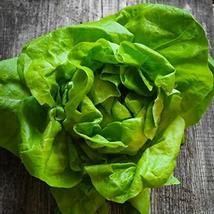 Tom Thumb Butterhead Lettuce Seeds - 100 Count Seed Pack - Non-GMO - The Perfect - $2.99