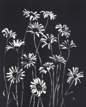 "Akimova: DAISIES, scratch paper, flower, black and white, 5.25""x7"" - $15.00"