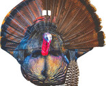 Montana Turkey Hunting Decoy Wiley Tom