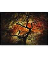 Japanese I by Philippe Sainte-Laudy, 22x32-Inch Canvas Wall Art - $46.93