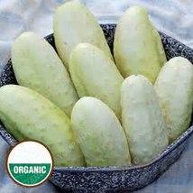 50Pcs Rare Purple Cucumber Delicious Vegetables (4), HZ Healthy Vegetabl... - $8.89