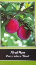 ALLRED PLUM 5 GAL Fruit Tree Plant Healthy Trees Sweet Plums Home Garden Plants - $98.95