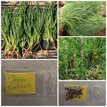 Greek Original Saltwort ''Salsola Soda'' ~35 Top Quality Seeds - Healthy - RARE - $14.08