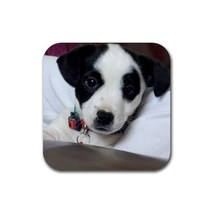Cute Sweet Jack Russell Puppy Puppies Dogs Pet Animal (Square) Rubber Co... - $1.99