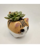 "Graptoveria Olivia Succulent in Cat Planter - 2.5"" Kitty Kitten Ceramic Pot - £11.00 GBP"
