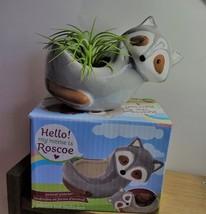 "Live Air Plant in Raccoon Animal Planter, 5"" grey glazed ceramic pot image 5"