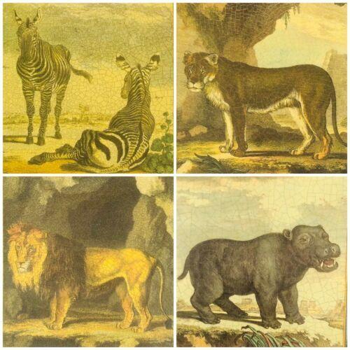 African CC Safari Shop Decoupage Animals Cork Back Set Of 4 Placemats Metal Edge - $33.44