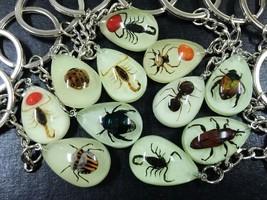 free shipping 30 PCS Luminous Mini Style Cool Real Mixed Fashion Insect ... - $43.94