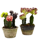 Colorful Cactus Gardens (Set of 2) - $64.40