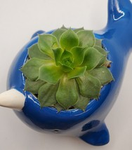 """Narwhal Whale Planter with live Succulent, 5"""" blue glazed ceramic animal pot image 4"""
