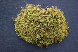 1 Quart bag - Fresh Live Hypnum Moss  - $12.99
