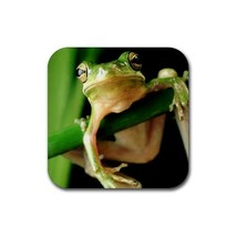 Beautiful Frog (Square) Rubber Coaster - $2.99