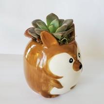 "Ceramic Animal Planter & Live Succulent 2"" Kangaroo Pot Echeveria Green Burgundy image 5"