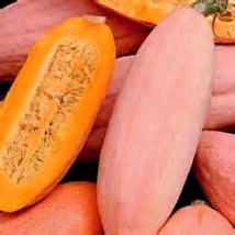 Jumbo Sweet Banana Squash! HUGE WITH GREAT TASTE! 15 Seeds COMBINED S/H! - $15.48
