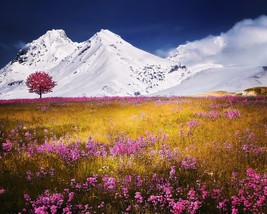 Photograph of Alps (8X10) New Landscape Photo Print Mountains Flowers Pi... - $7.66