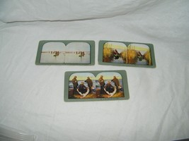 3 vintage Stereograph stereoview photo view cards Duck Hunting 18141 - $16.24