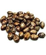 Organic Castor Essential Oil Plant/Ricinus communis Seeds Aromatherapy B... - $1.97+